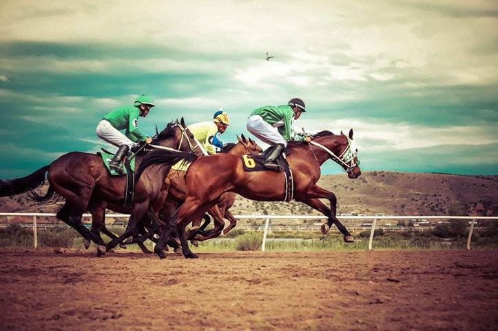 2019-Horse-Sale